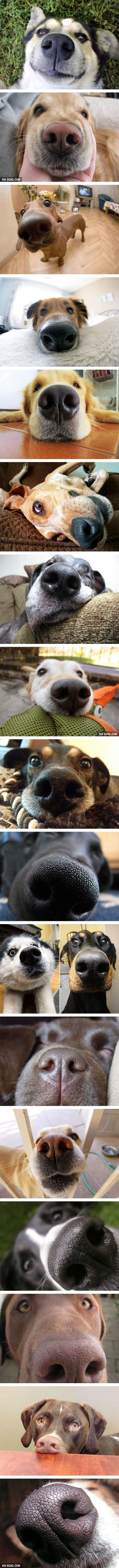 Unbearably adorable dogs nose close-up