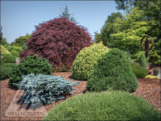 Conifer Garden Ideas conifers shine through four seasons The Amazing World Of Conifers Garden Design With Conifers