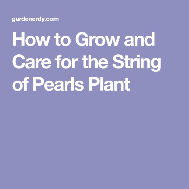 how to grow string of pearls