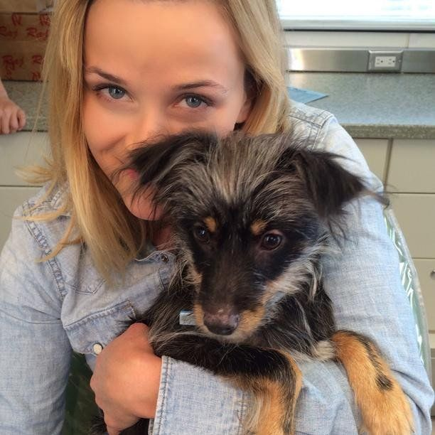 Pin for Later: Bikinis and Puppies Take Over This Week's Cutest Celebrity Candids