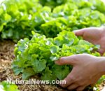 7 tips for creating a successful organic vegetable garden almost anywhere