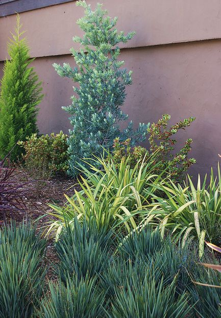 1000 Images About Privacy Plants On Pinterest Container