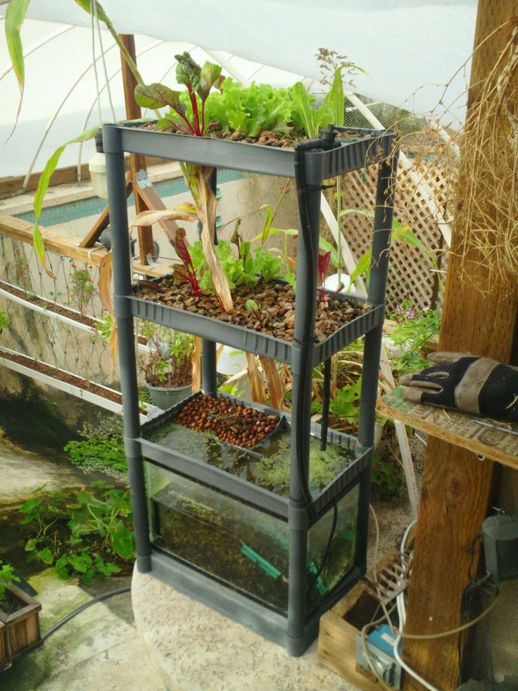 Shelving garden take old shelving a fish tank a pump and for Aquaponics fish food