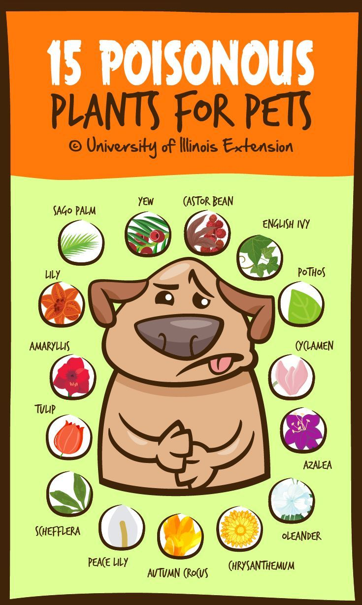 """15 Poisonous Plants for Pets"" — A good list to keep handy if you have pets! #safety #infographic"