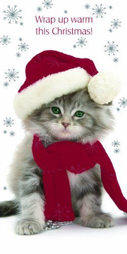 Kitten Christmas Cards. A wide range of kitten themed cards.  #christmascats #catlovers