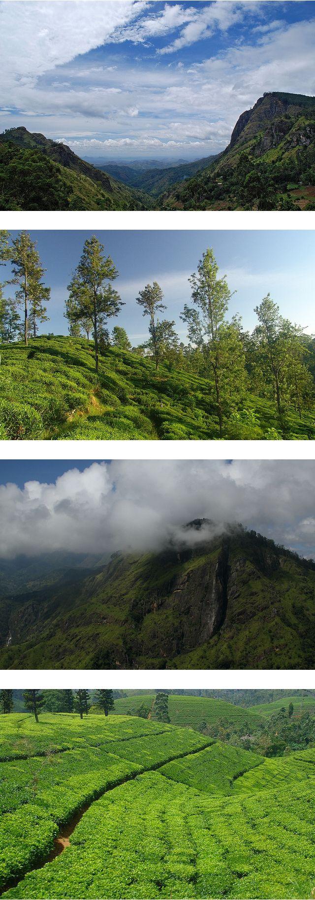 Ella, Sri Lanka #SriLanka #Ella #TeaCountry