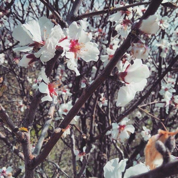 Bahar gelmiş.