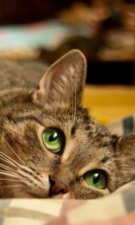 Beautiful green-eyed kitty