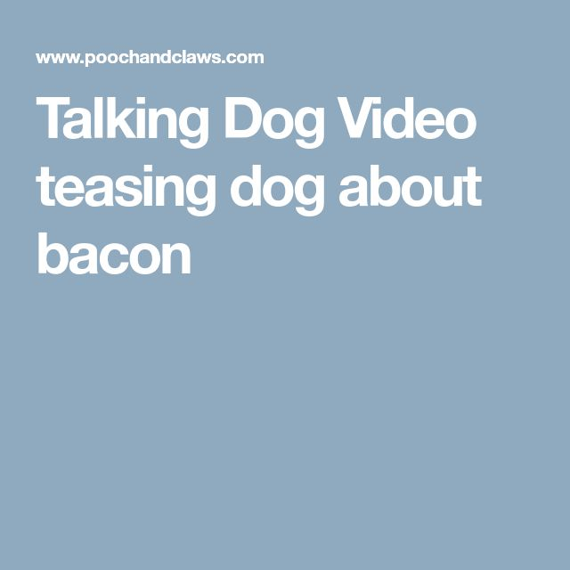 Talking Dog Video teasing dog about bacon