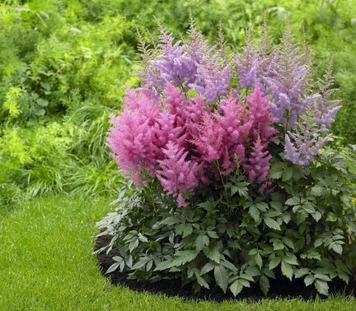 Конец лета – это не только время сбора урожая, но и время уделить внимание своему цветнику. Рассказываем, какие цветы можно посадить, пересадить и посеять на клумбу в августе. Август – жаркая пора не ...