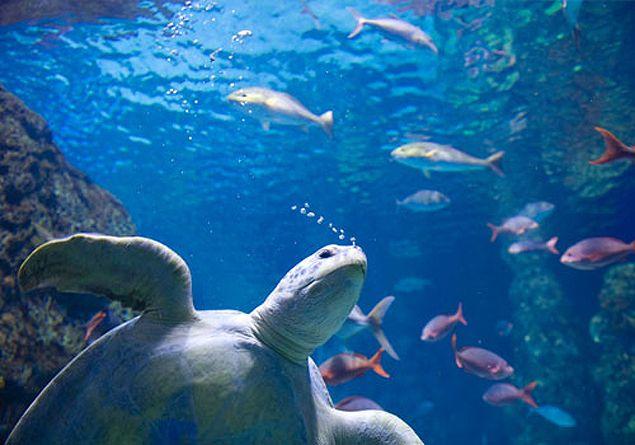 Confirmado: pesticidas pueden matar hasta el 42% de la vida acuática - LR21.com.uy