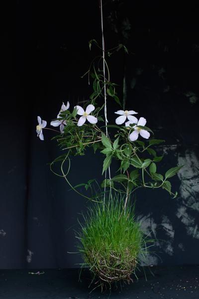 String Gardens – Der niederländische Künstler Fedor Van der Valk, der mit den blühenden Pflanzen das ganze Jahr über blüht