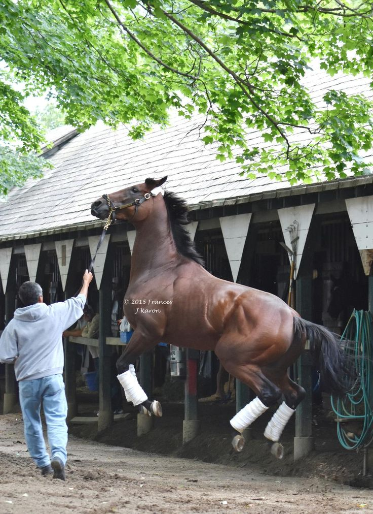 Air Horse One. #AmericanPharoah airborne after arriving at Saratoga this afternoon.:
