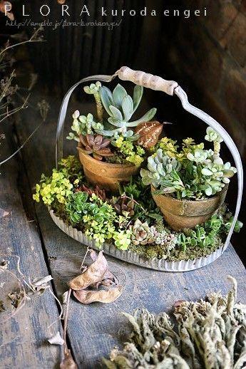 多肉植物の寄せ植え。。。持ち手付きディッシュに寄せ鉢スタイル寄せ植え。長っ |フローラのガーデニング・園芸作業日記