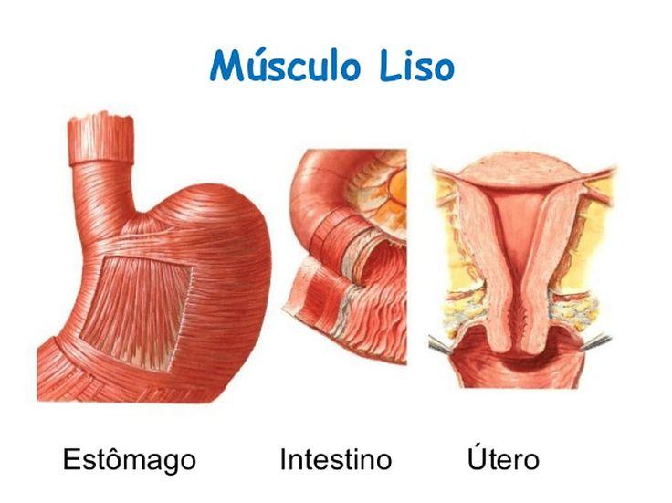 Músculo Cardíaco y Liso   mirandafisioterapia