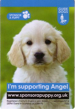 We are supporting Angel the Guide Dog