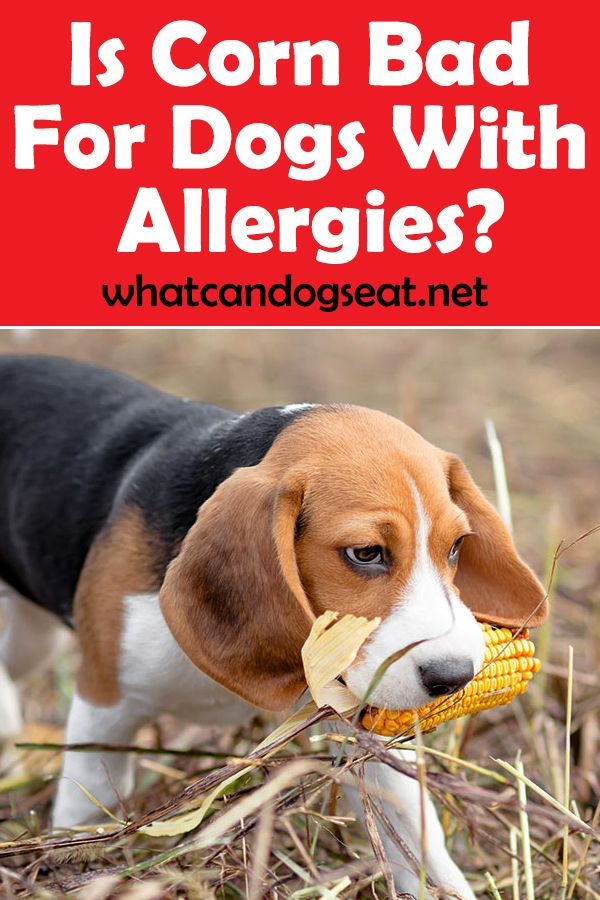 According To Dr Jennifer Coates From Petmd Food Allergies Are