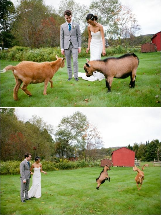 goats jumping for joy at mountain meadow lodge #weddingvenue #uniquewedding #weddingchicks http://www.weddingchicks.com/2014/01/27/handcrafted-wedding-2/