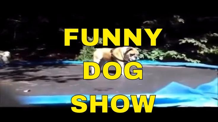 Funny dog show Dogs on Trampolines