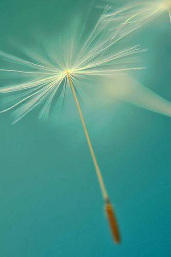 ღღ Aquamarine ~ Teal ~ Turquoise ~ Beautiful ~ Calming ~ Aqua.
