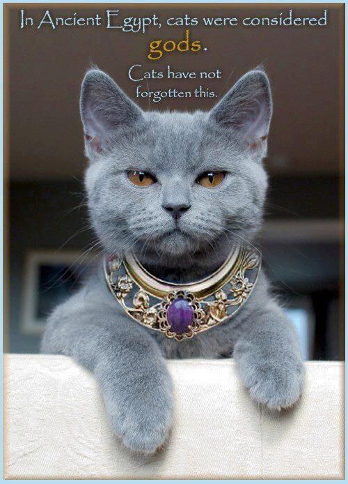 """""""Thousands of years ago, cats were worshipped as gods. Cats have never forgotten this."""""""