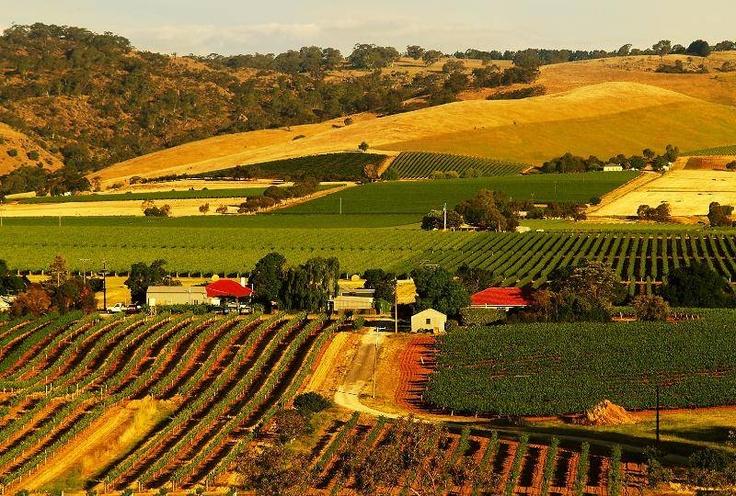 Australian wine region