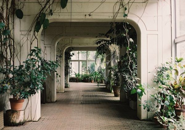 Spaces, Dreams, Interiors, Tokyo Japan, Inside Plants, Houseplants, Gardens, Places, Green House