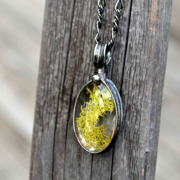Real dry pressed moss from our Louisiana bayou. Encased in glass. Great gift for the nature lover.