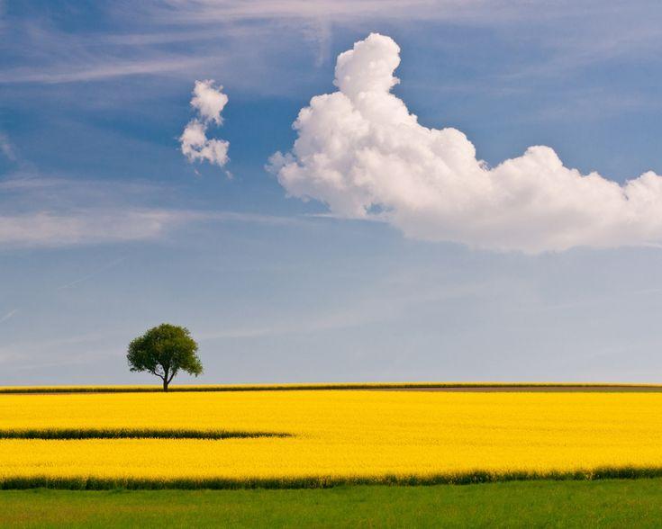 дерево, поле, облако, желтый, зеленый, небо, одинокое, простота