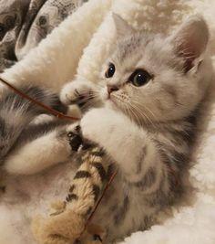 Kitten On It's Back