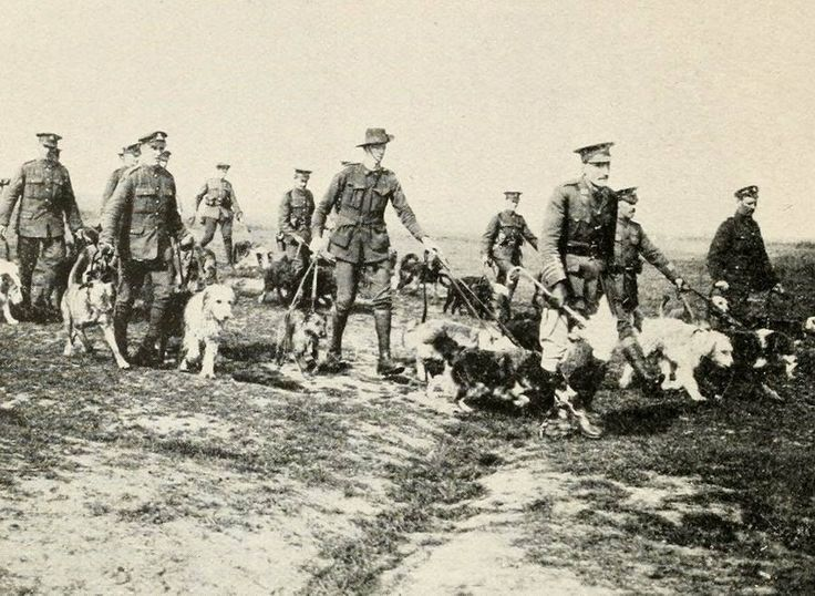 (Courtesy of The Great War Primary Documents Archive www.gwpda.org) Soldados llevando perros de guerra. (British War Dogs: Their Training and Psychology; Skeffington & Son, Ltd, London)