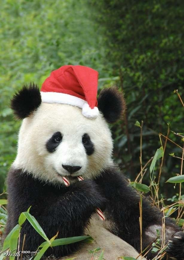 Even the Panda Bear got a hat, and a candy cane...........