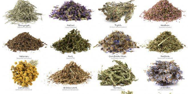 15 plantas medicinales que arruinarían las farmacéuticas – Mundoamores