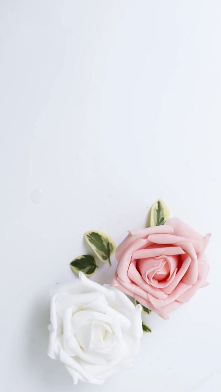 White and pink rose wallpaper.