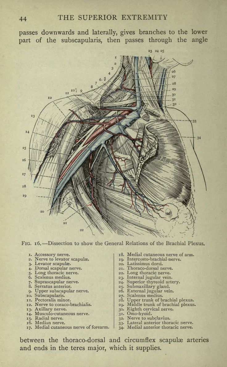 Cunningham Manual Of Practical Anatomy Pdf