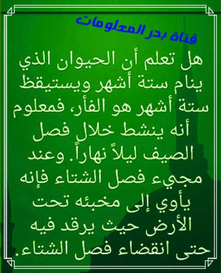معلومات عن الفئران معلومات عن الحيوان الذي لا ينام Calligraphy Arabic Calligraphy 90 S