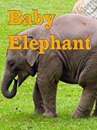 Indian elephant - a baby