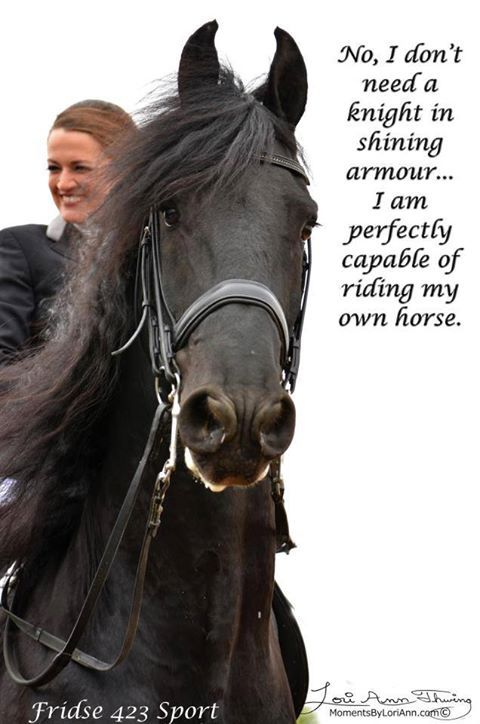 horse quote humor no i don t need a knight in shining armor i am perfectly capable of riding my own horse