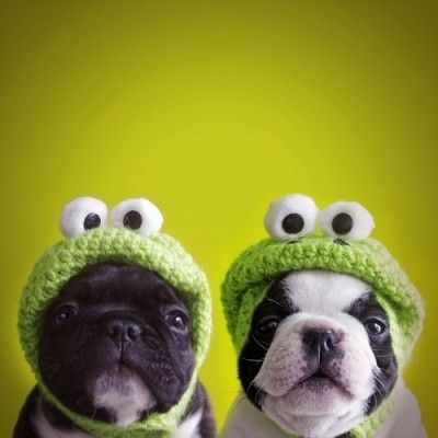 Funny Dogs Wearing Knitted Frog Hats
