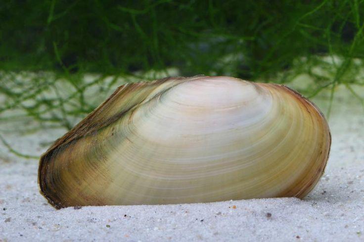 335 besten gartentipps bilder auf pinterest blumen for Gartenteich algenfresser