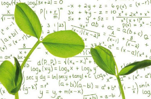 Les plantes vertes savent compter !