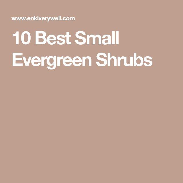 10 Best Small Evergreen Shrubs