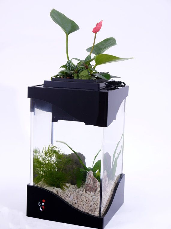 11 best multi functional planters images on pinterest for Fish tank planter