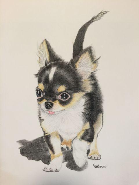 「チワワの仔犬2」/「jolie.craft.8」のイラスト [pixiv]