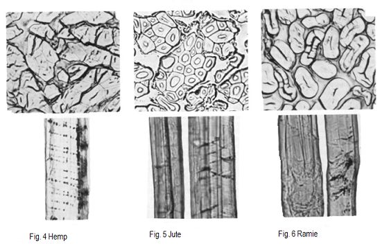 Online Clothing Study Microscopic View Of The Natural And