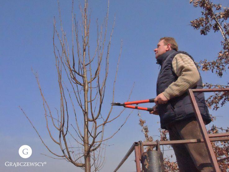 Pracowity, wiosenny poranek! :)  #Grabczewscy #Garden #Work #Tree