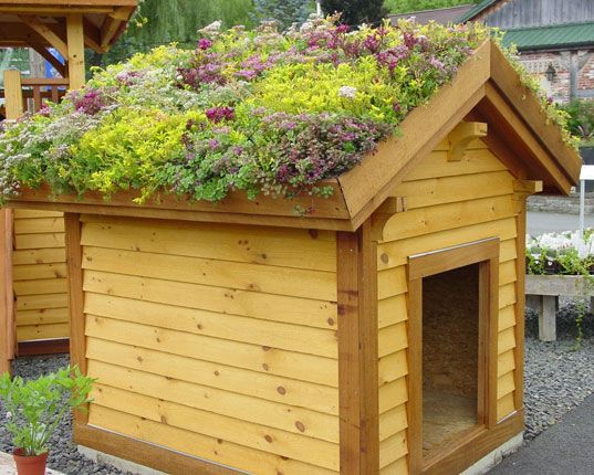 There are green roofs, and then there are truly green roofs. The living and growing roof on this dog house will keep it cool, plus it looks like a great place to grow your kitchen herbs! For green remodeling in MN, visit http://www.quarve.com