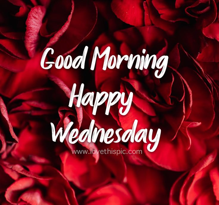 Pin on 03 Happy Wednesday