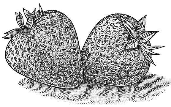 Food Illustration for Rodale Press - Strawberry season is coming.