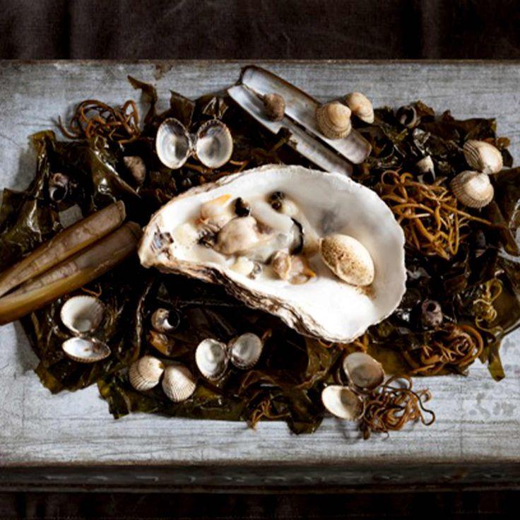 Meeressalat mit Blumenkohl Crème und Austern-Eis... Moment mal... Auster-EIS? Ja, unbedingt! Klickt auf das Bild für das Rezept - probieren geht bekanntlich über studieren!